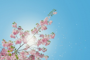Spring Yogic Lifestyle - Spring Yogic practices Just For You!